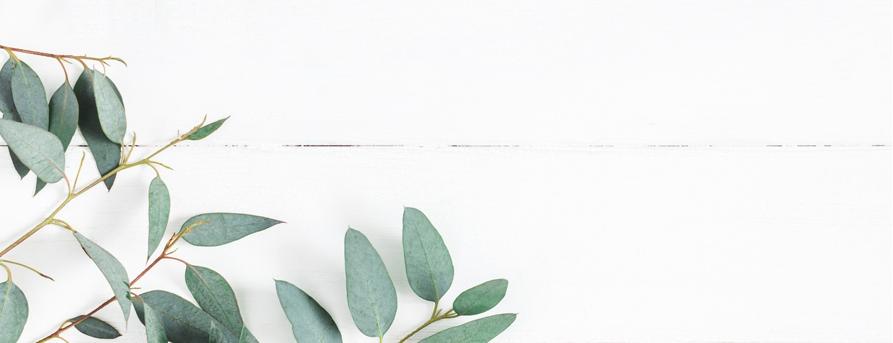 Eucalyptus leaves on white background
